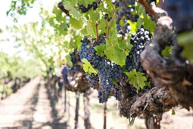 Winzer und Weingüter